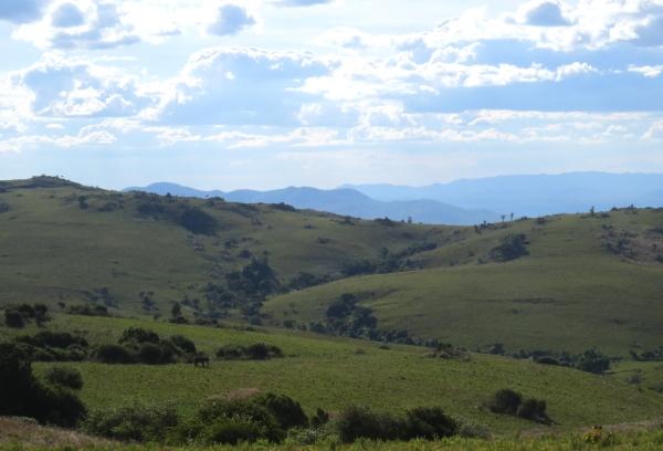 IMG_4978 Nyika Plateau