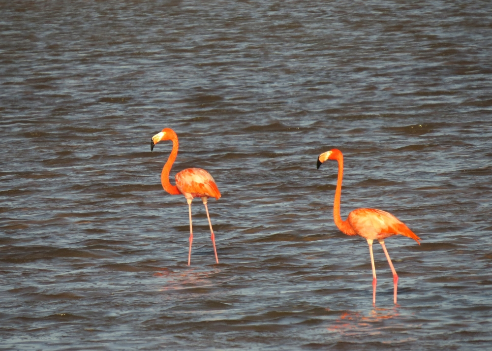 IMG_0263 Am Flamingos