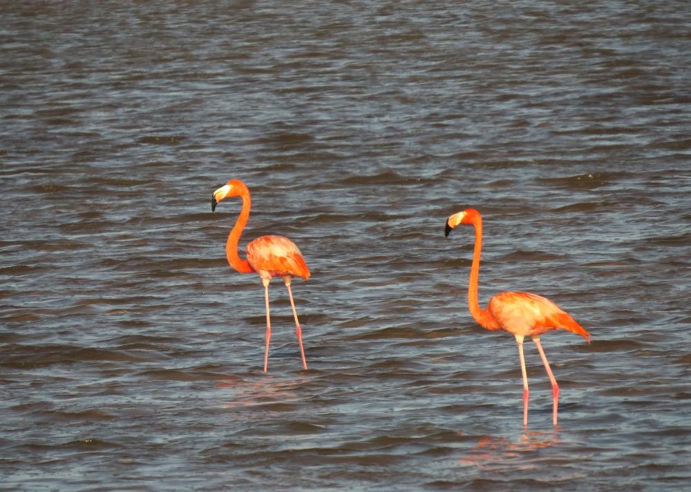 IMG_0263 Am Flamingos