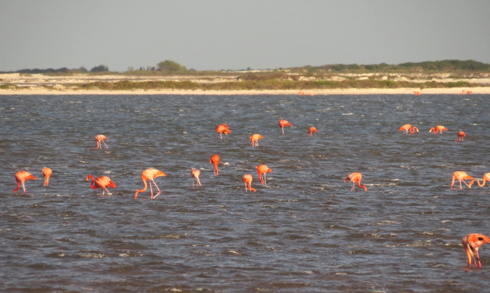 IMG_0280 Am Flamingos