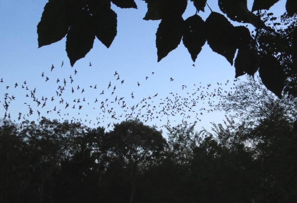 IMG_1194  bats