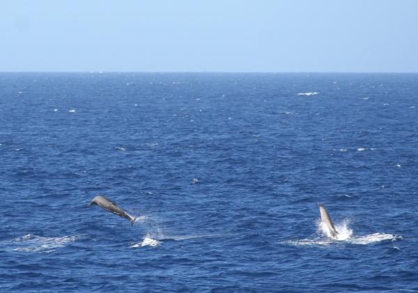 IMG_5110 Beaked Whales