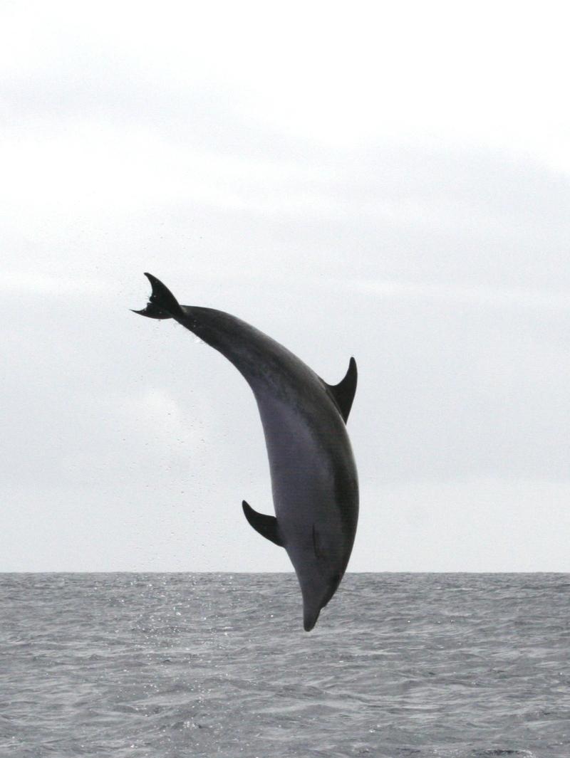 IMG_5235 BN Dolphin