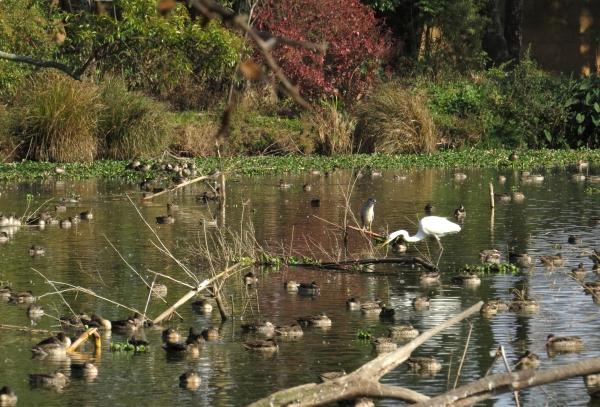 IMG_0122 Tsarasaotra Lake