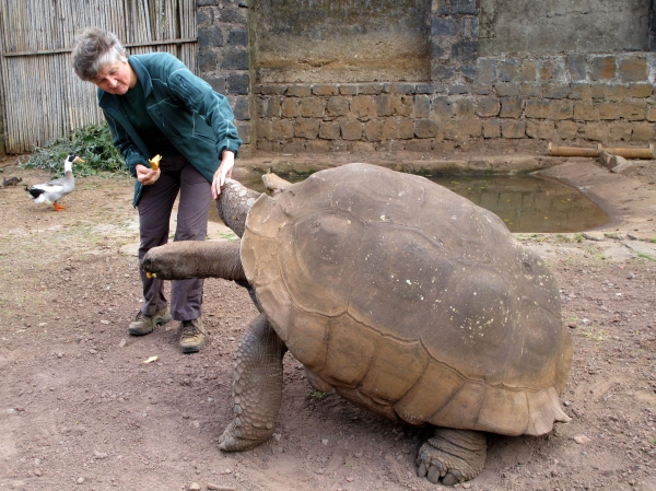 IMG_0620 Giant tortoise