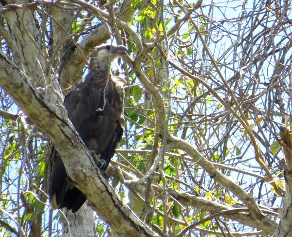 IMG_1043 Mad Fish Eagle