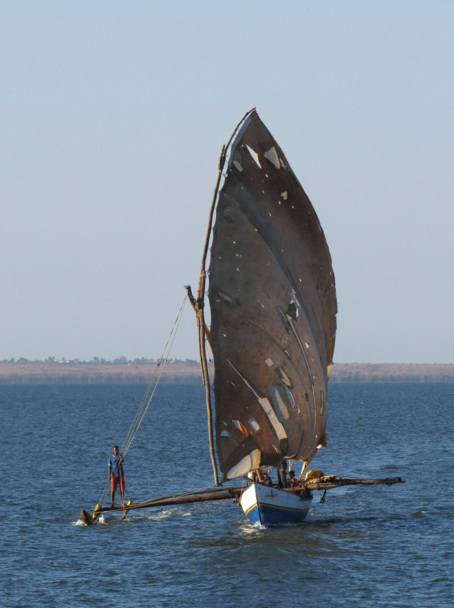 IMG_1058 ragged sail