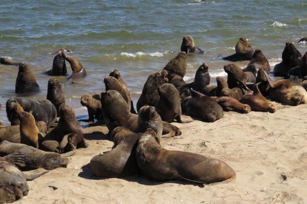 IMG_2599 Sea Lions