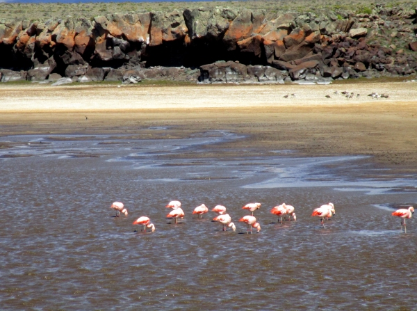 IMG_1268 flamingos on plateau lake