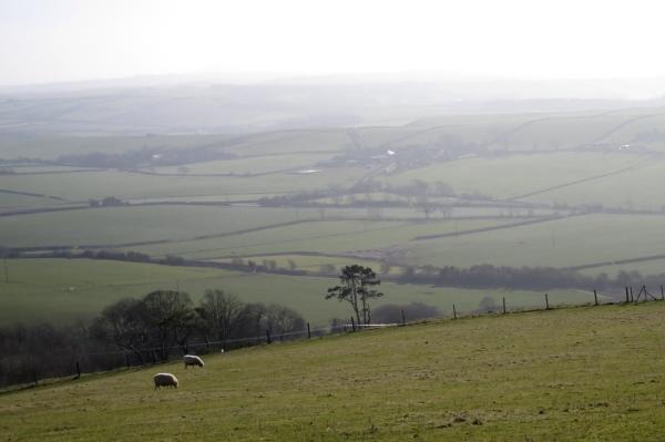 IMG_2512 west Dorset