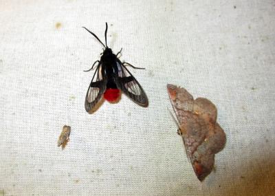 IMG_1476 moths