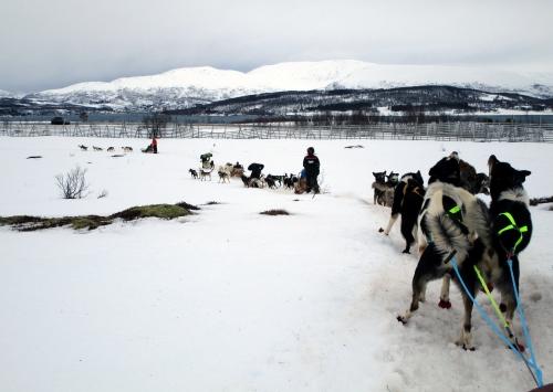 IMG_1656 dog sledding