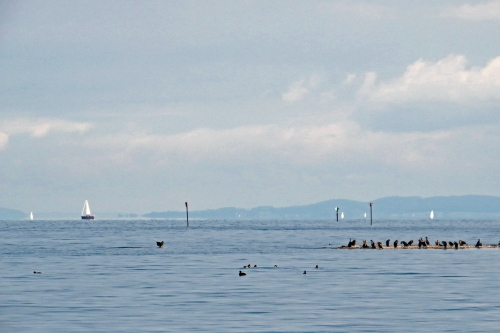 IMG_8214 Bodensee