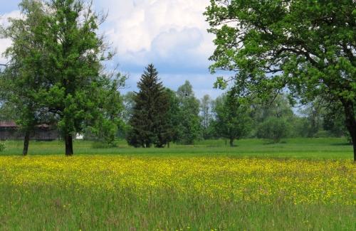 IMG_8307 meadow