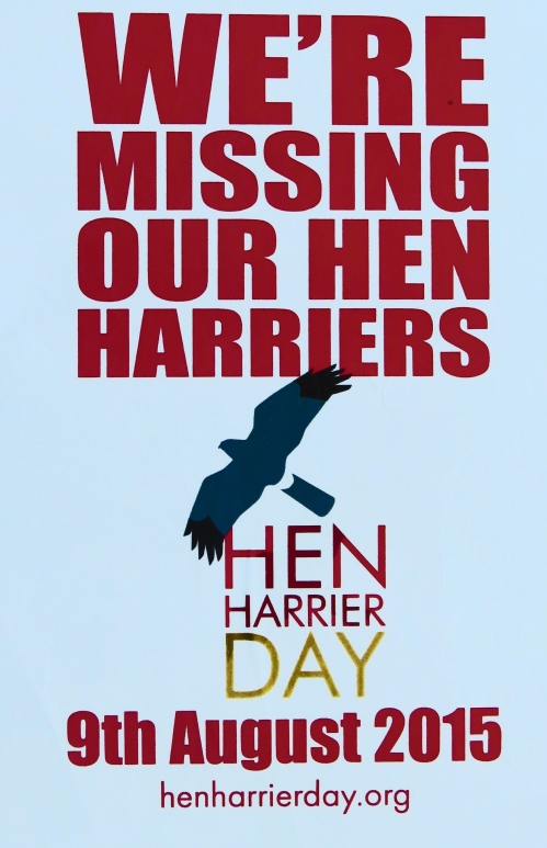 IMG_9121 Hen Harrier Day Poster_edited-2