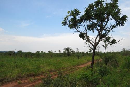 IMG_0793 Mbaracayu savana