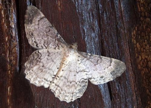 IMG_0851 moth