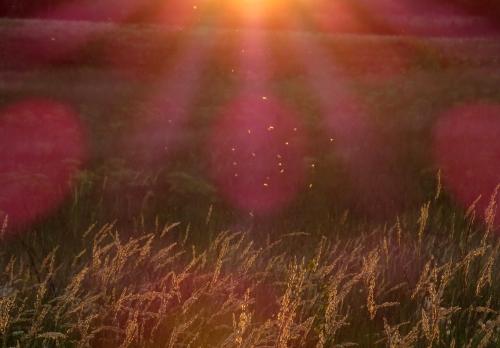 IMG_1131 sunset & bugs