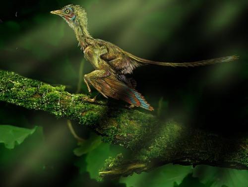 01-archeopteryx-2-Archeopteryx (1)