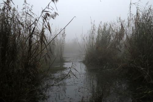 IMG_2353 Harike fog