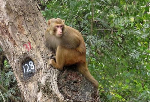 IMG_2362 Harike Macaque