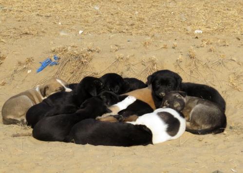IMG_2449 puppies