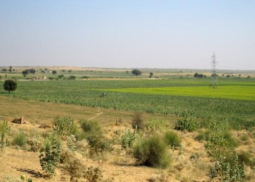 IMG_2501 cultivated desert