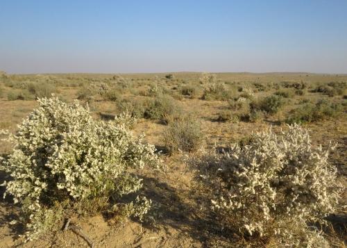 IMG_2699 Desert NP