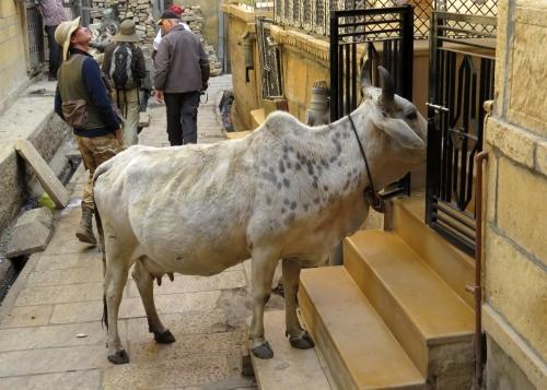 IMG_2901 Jaisalmer