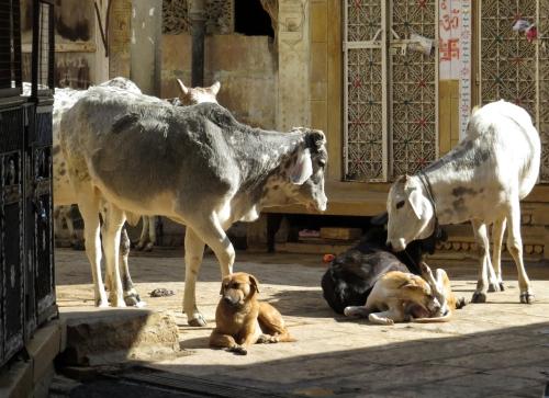 IMG_2907 Jaisalmer