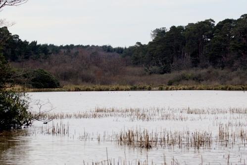 7F1A6019 Mordon Lake