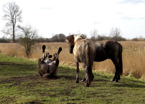 IMG_4034 konig horses