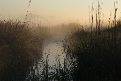 Albufera at dawn