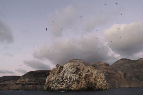 IMG_4443 Boatswain Bird Island