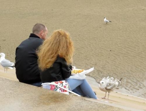 IMG_6224 gulls being fed