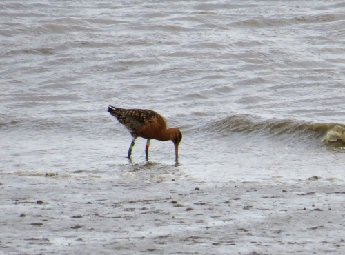 IMG_6294 cr Blackwit