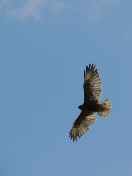 img_8120-variable-hawk