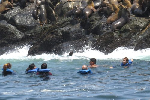 img_8497-swimming-with-sealions