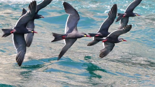inca-terns